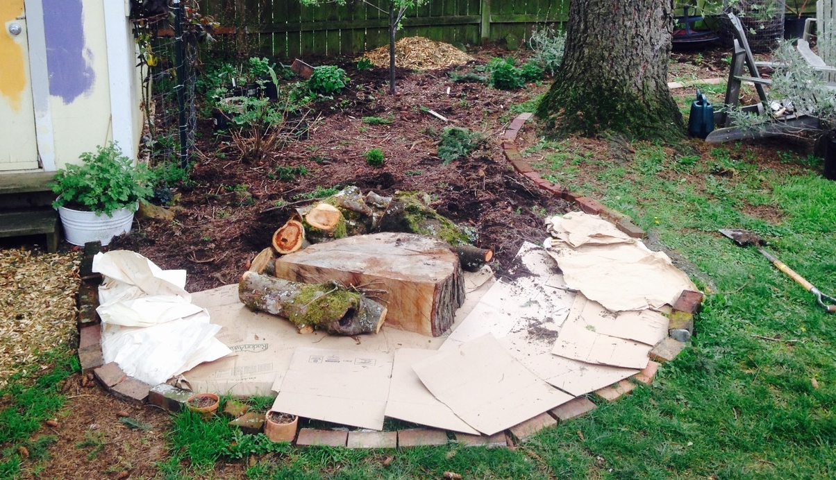 Step 2: Lay down cardboard to smother the grass. Add logs as filler and to create a hugelkultur garden.