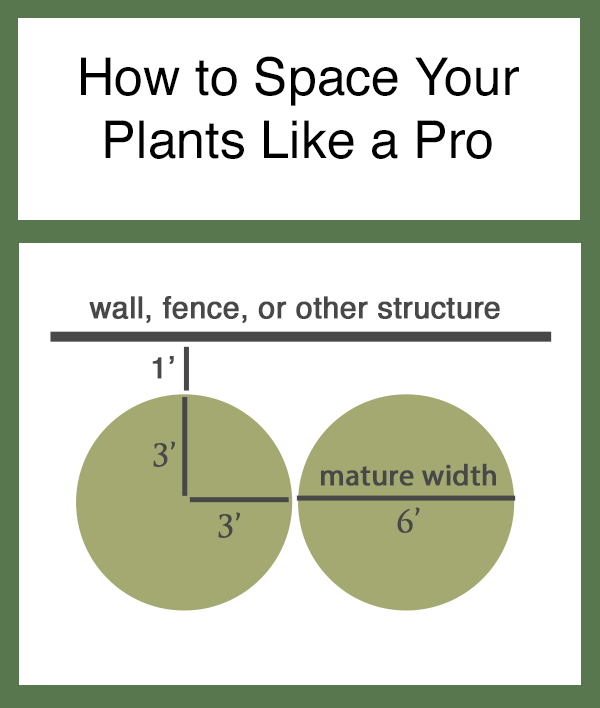 how to space your plants like a pro.png
