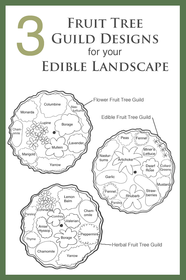 permaculture fruit tree guilds.png