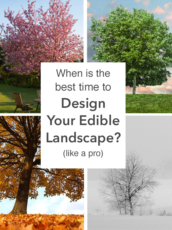 edible landscape design_best-time-to-design.png