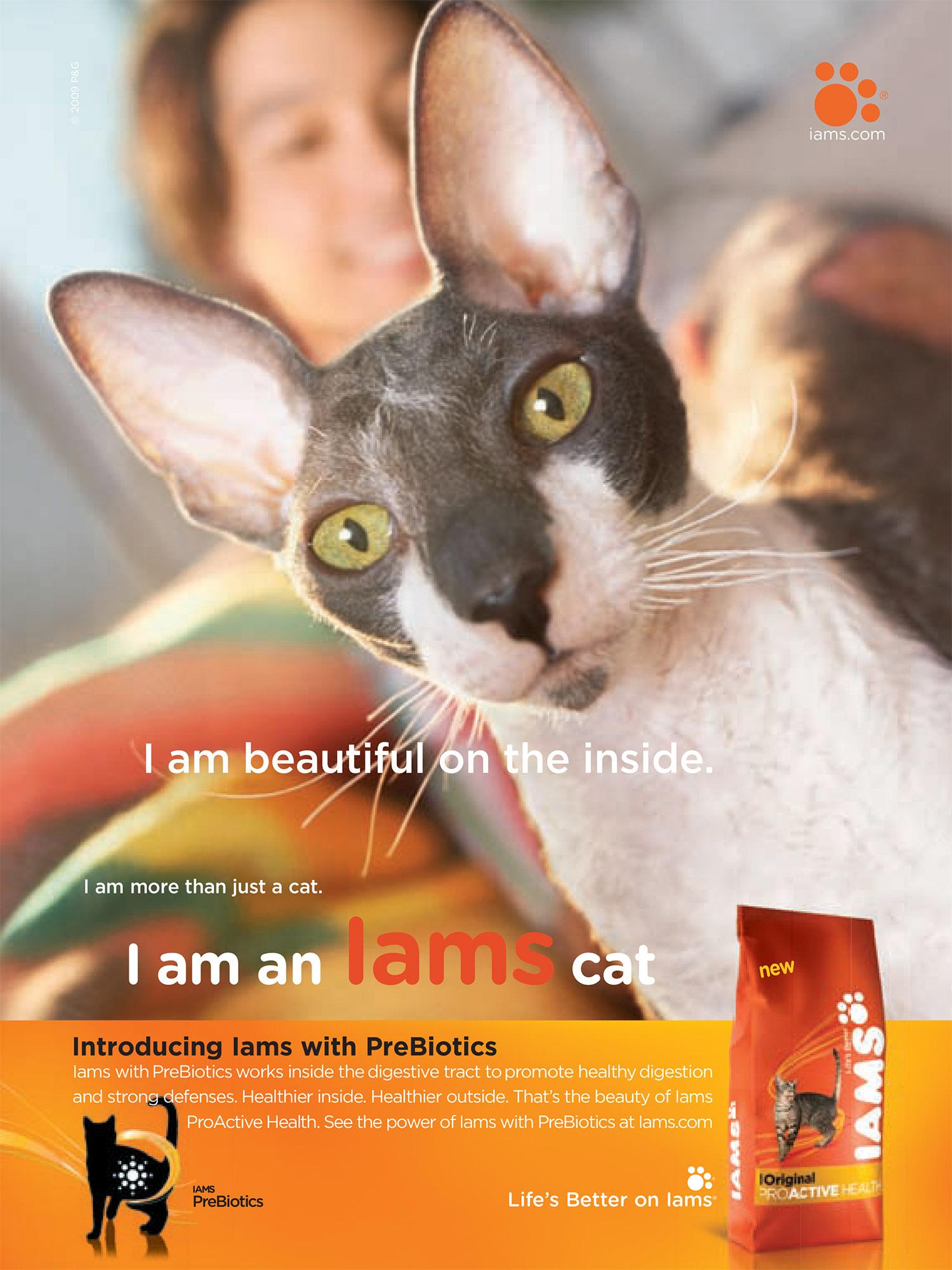 PA cat Sept copy copy.jpg