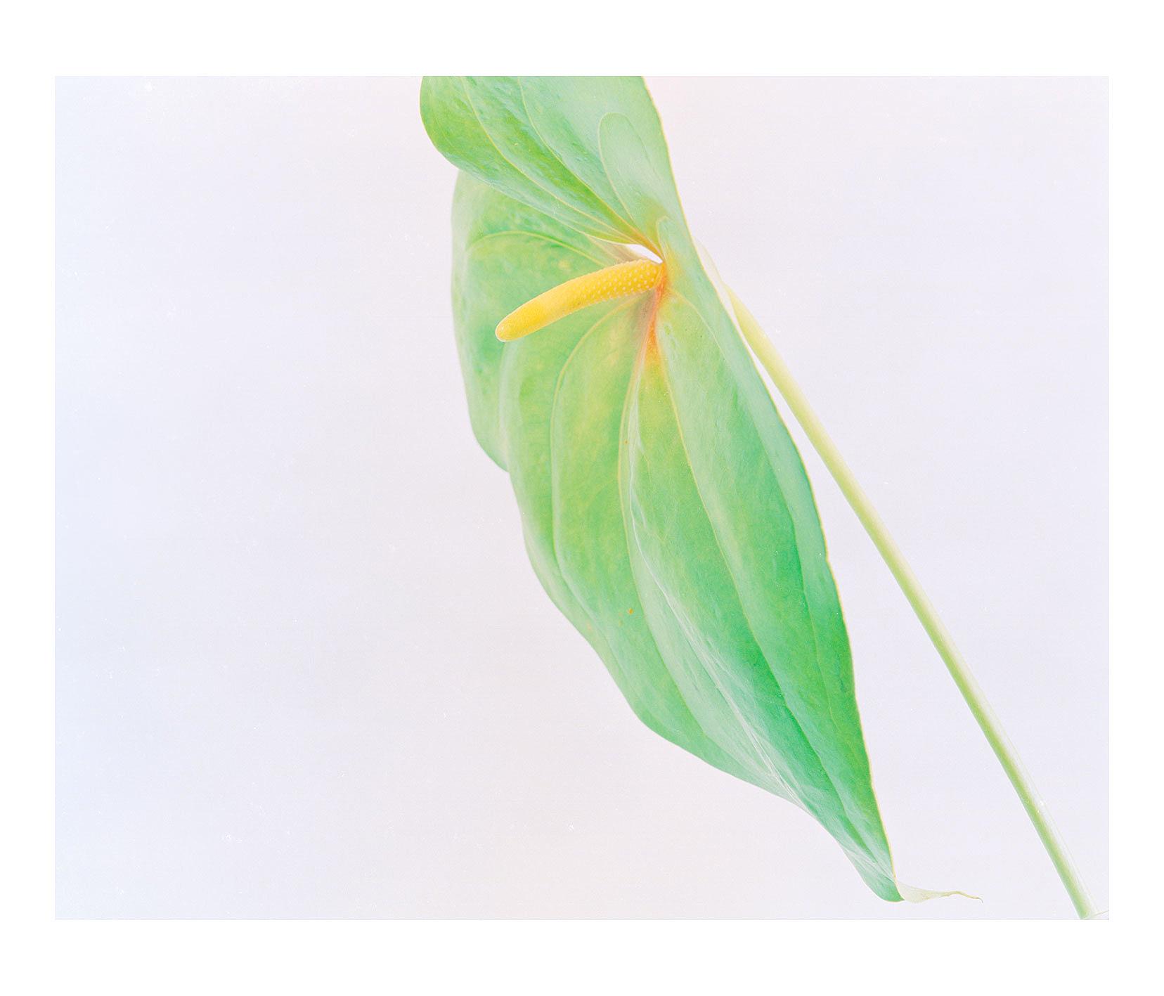 georgia-kokolis-flower--8-copy.jpg