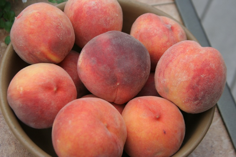 Feast on fruit at the Palisade Peach Festival. Lauren Brown / Flickr via Creative Commons