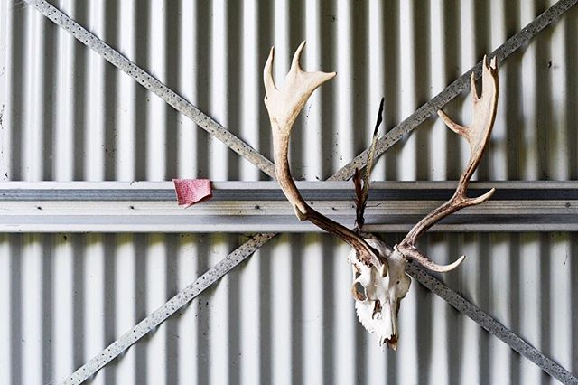Still life with stag and dishcloth, 2019
