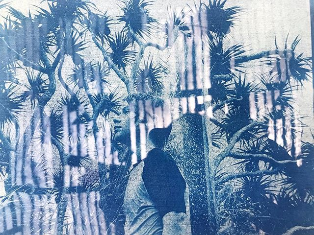 If I'm going to do housework on this glorious day, may as well cyanotype too. This image taken at Minnie Water