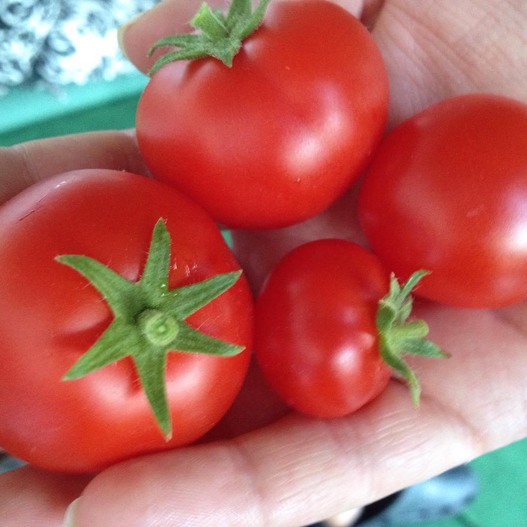 Tomatoes from Rita's garden.