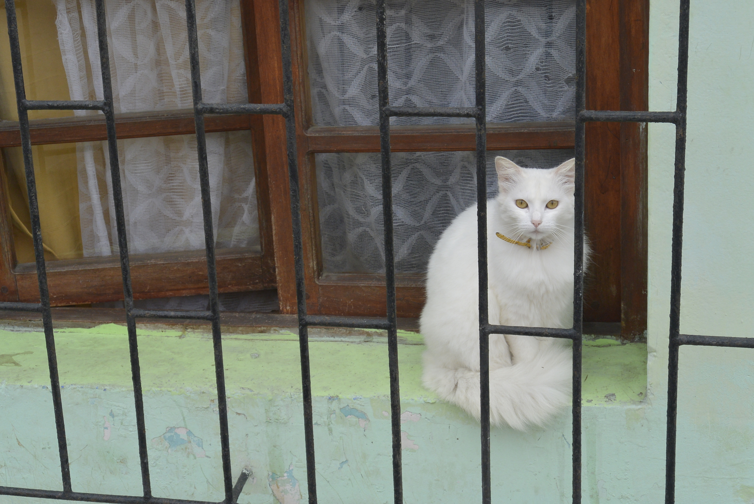 Coquimbo Chile Cat