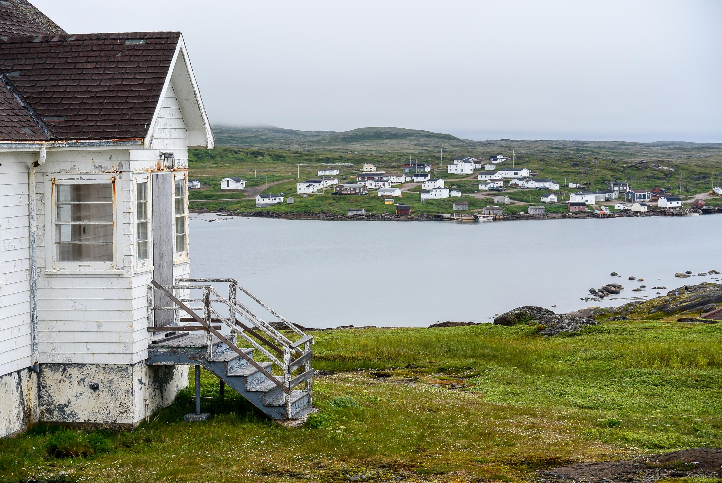 Red Bay Labrador