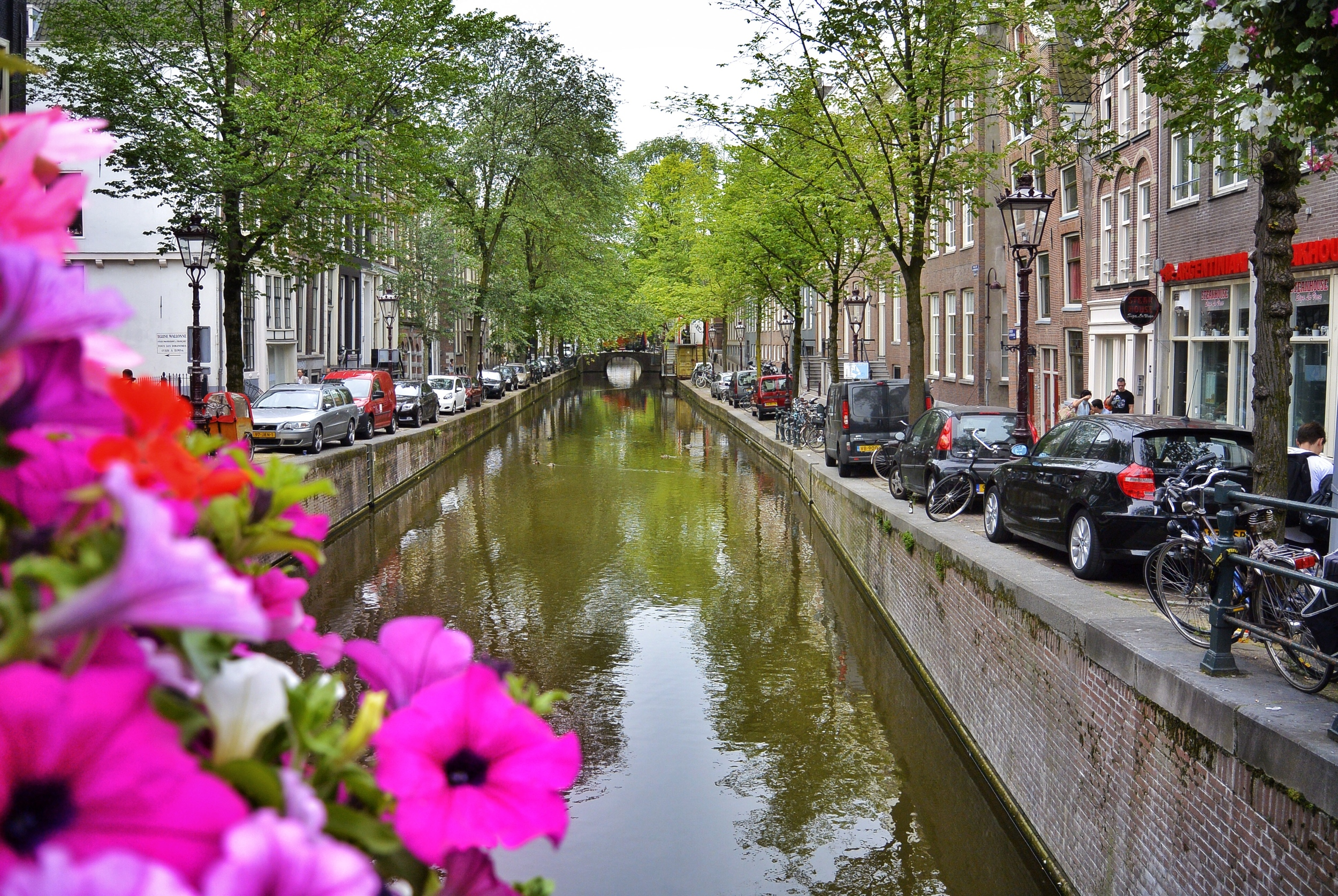 Amsterdam Canal and Flowers