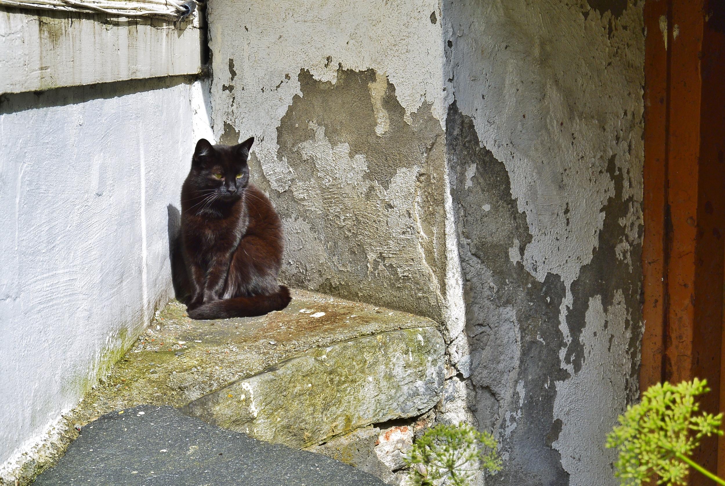 Black Cat in Bergen