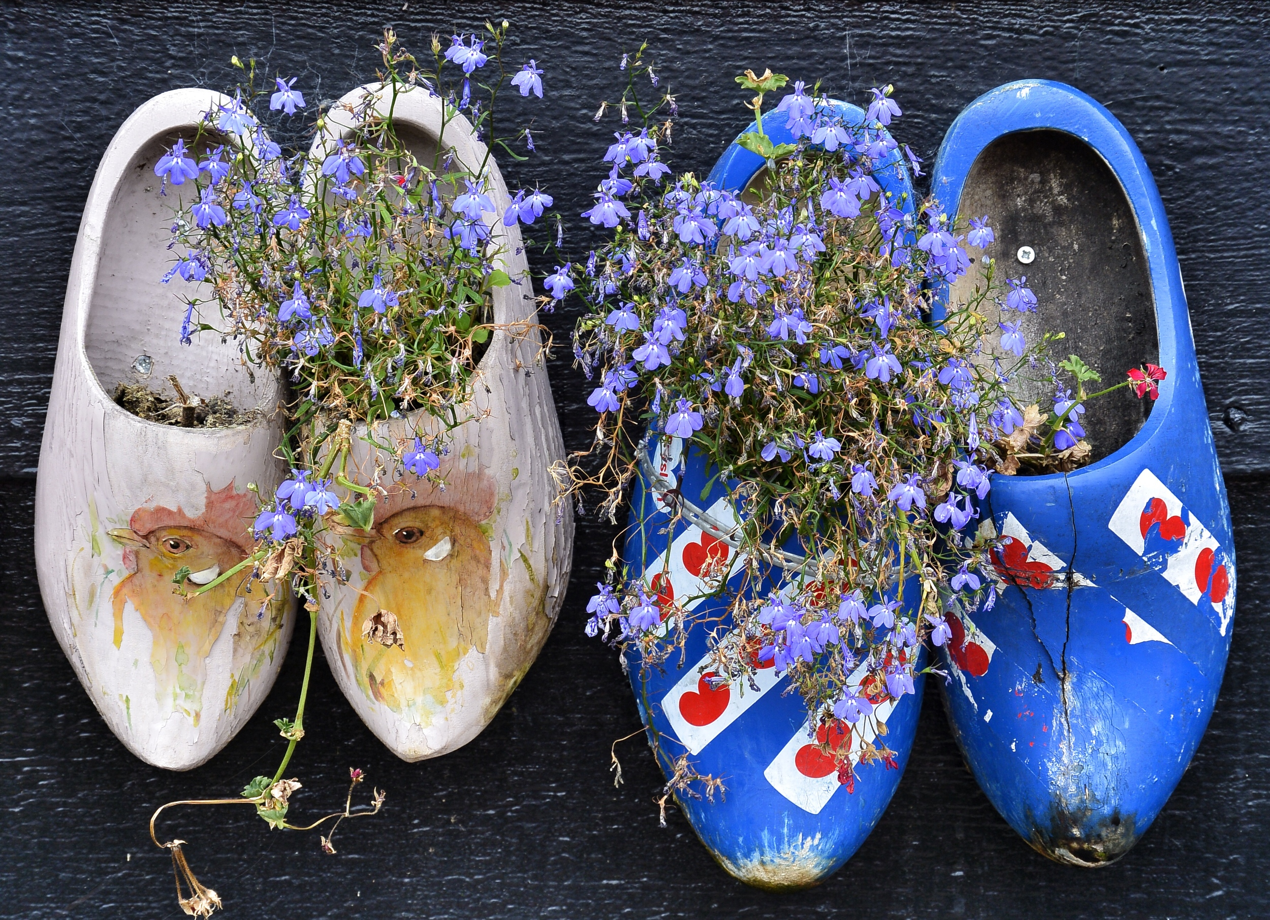 Dutch Clogs with Flowers
