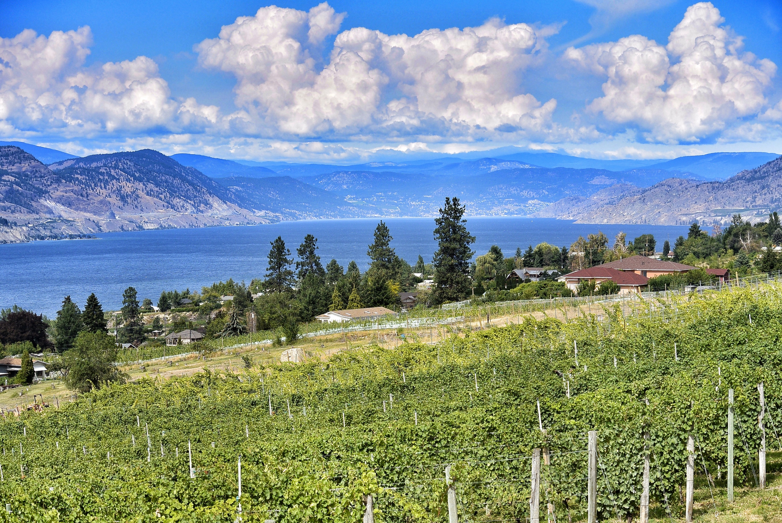 Naramata Bench winery views