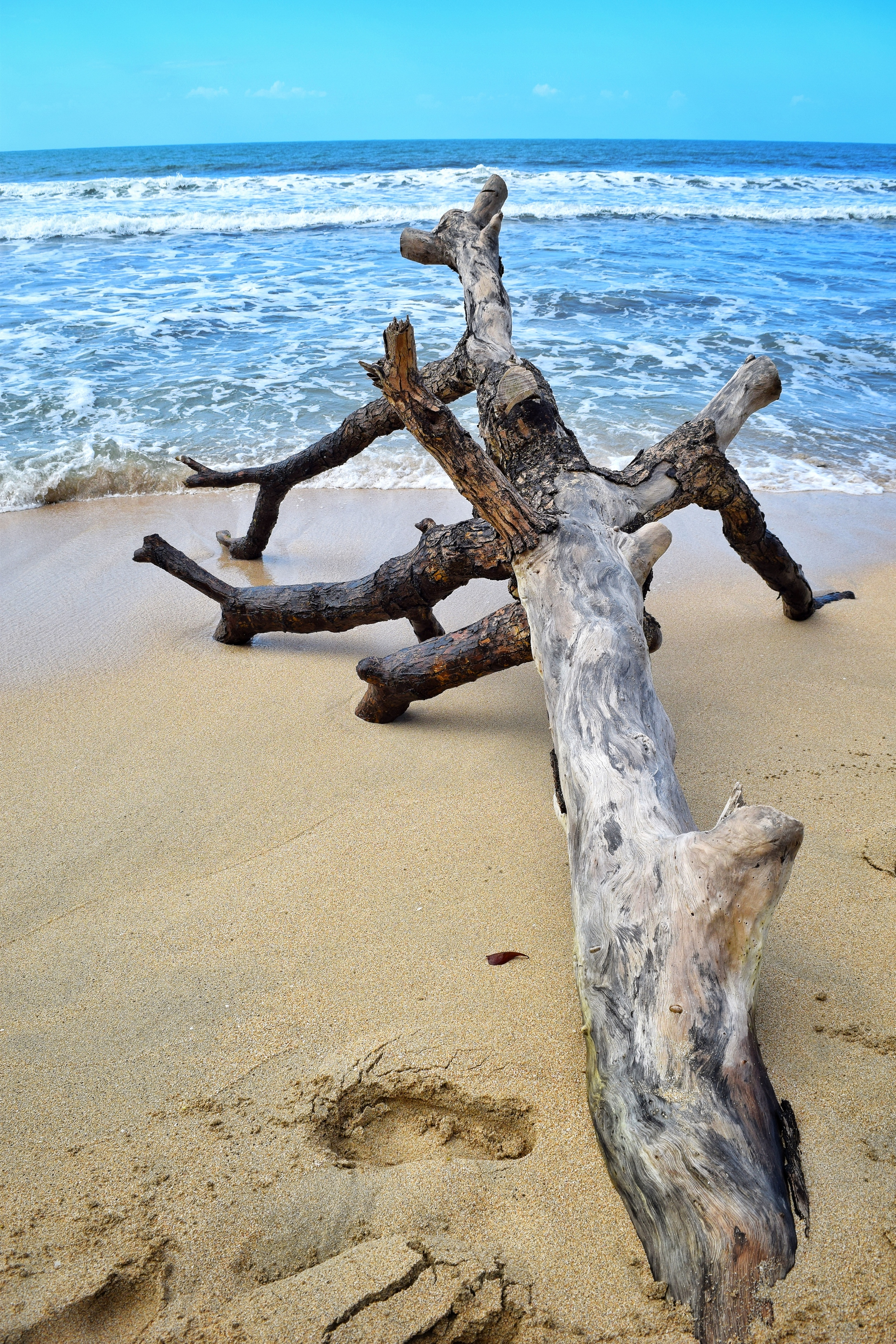 Driftwood on the beach in Cahuita National Park