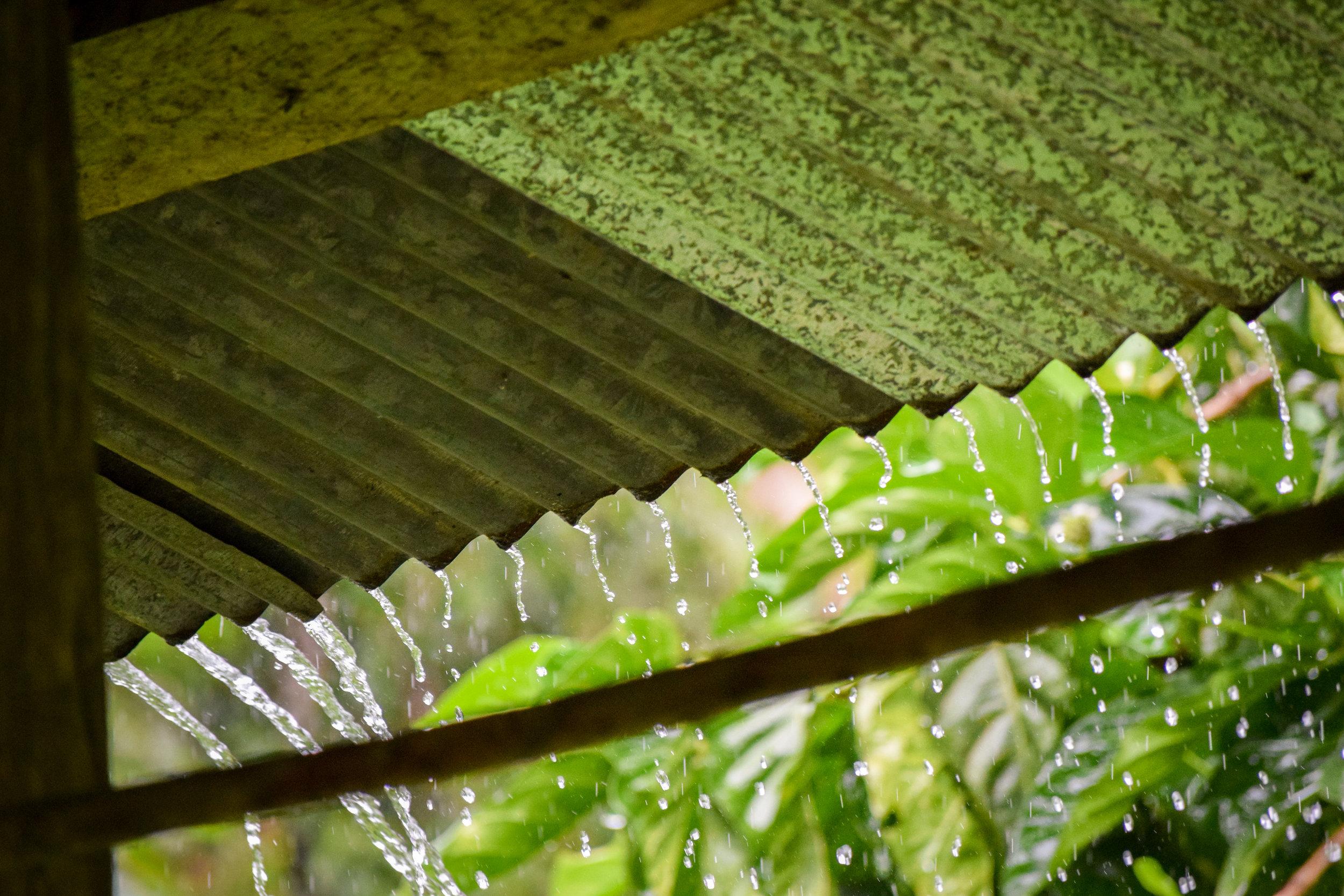 Rain forest downpour