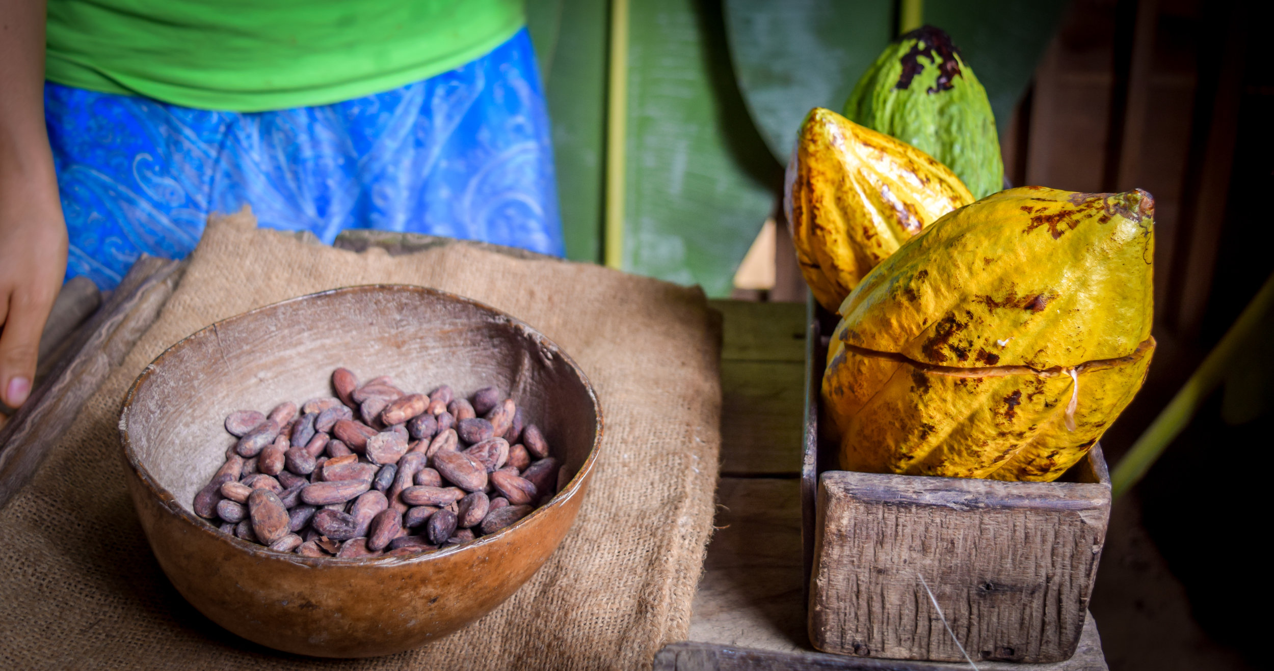 Cacao house demonstration