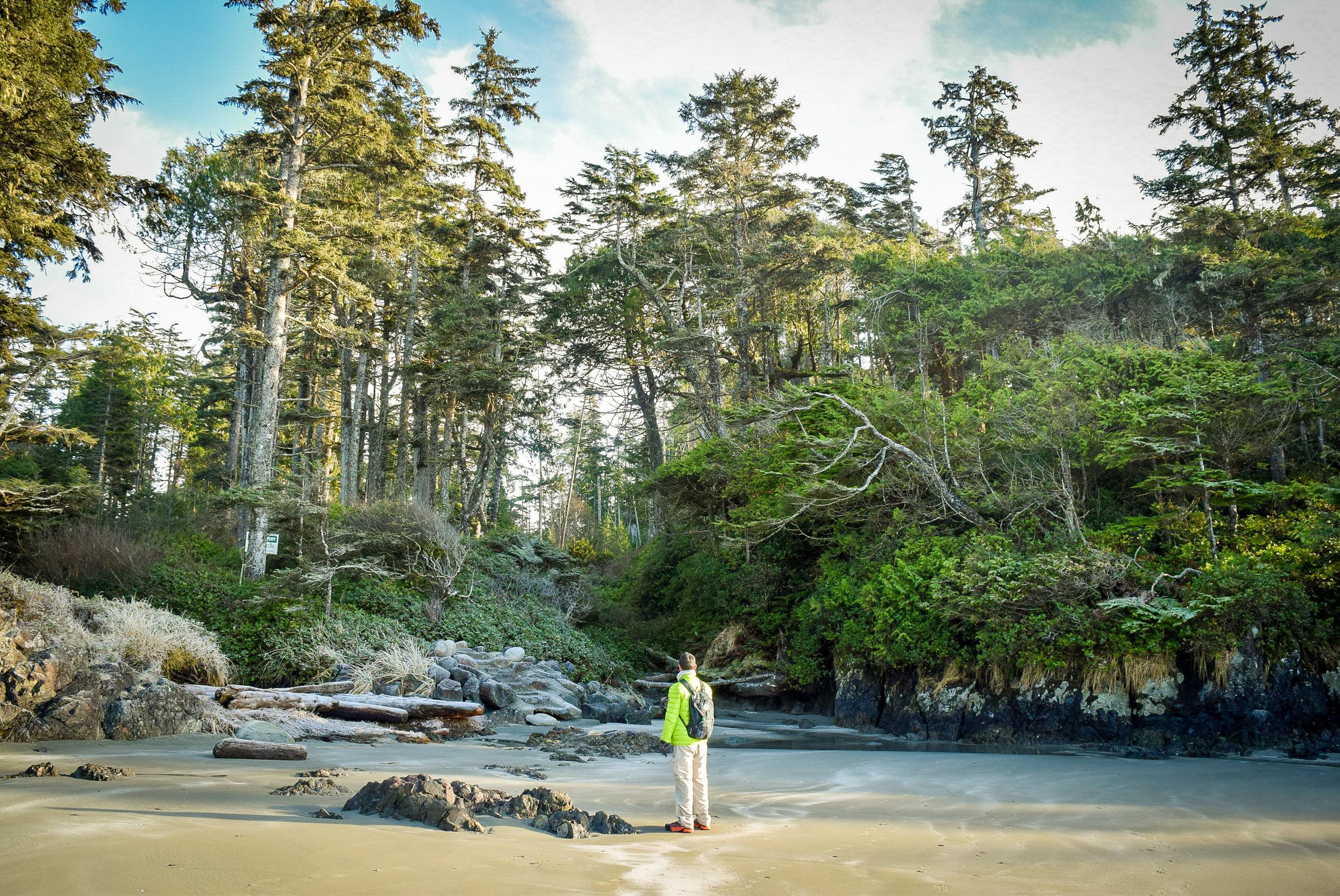 Chesterman Beach Rainforest