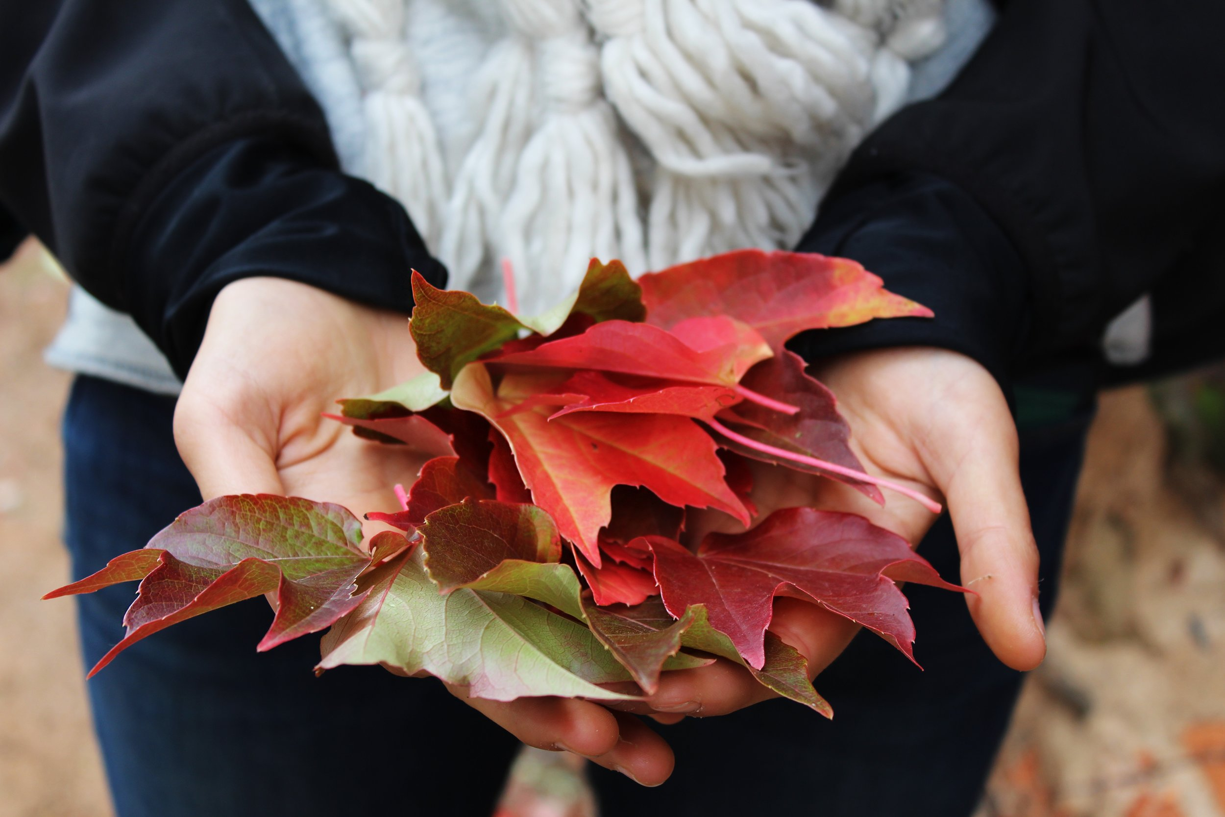 Holding red leaves in autumn
