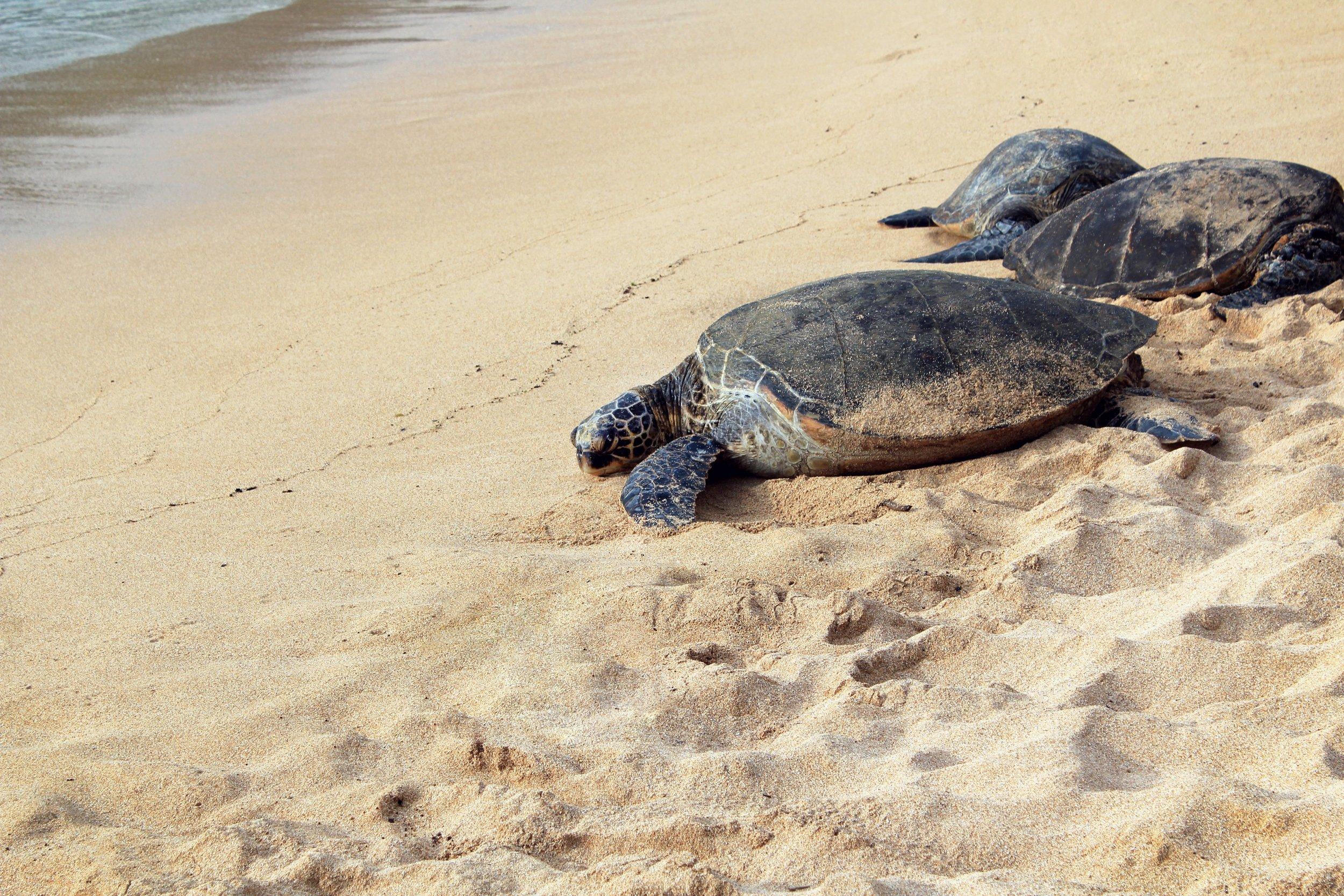 Turtles on a beach