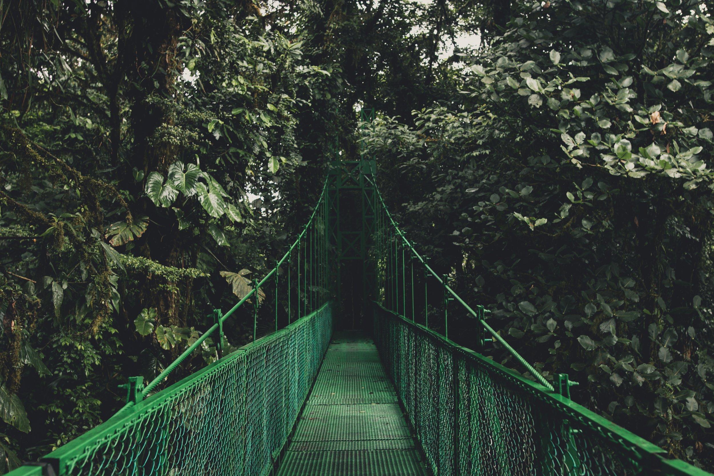 Bridge into the jungle