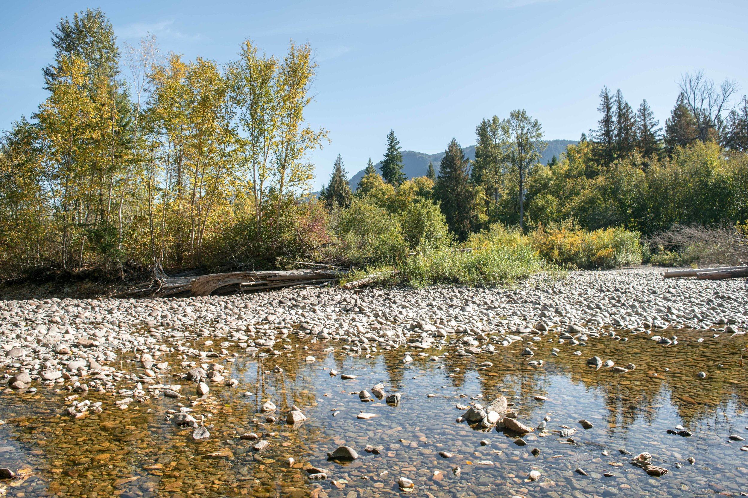 Adams River, Shuswap