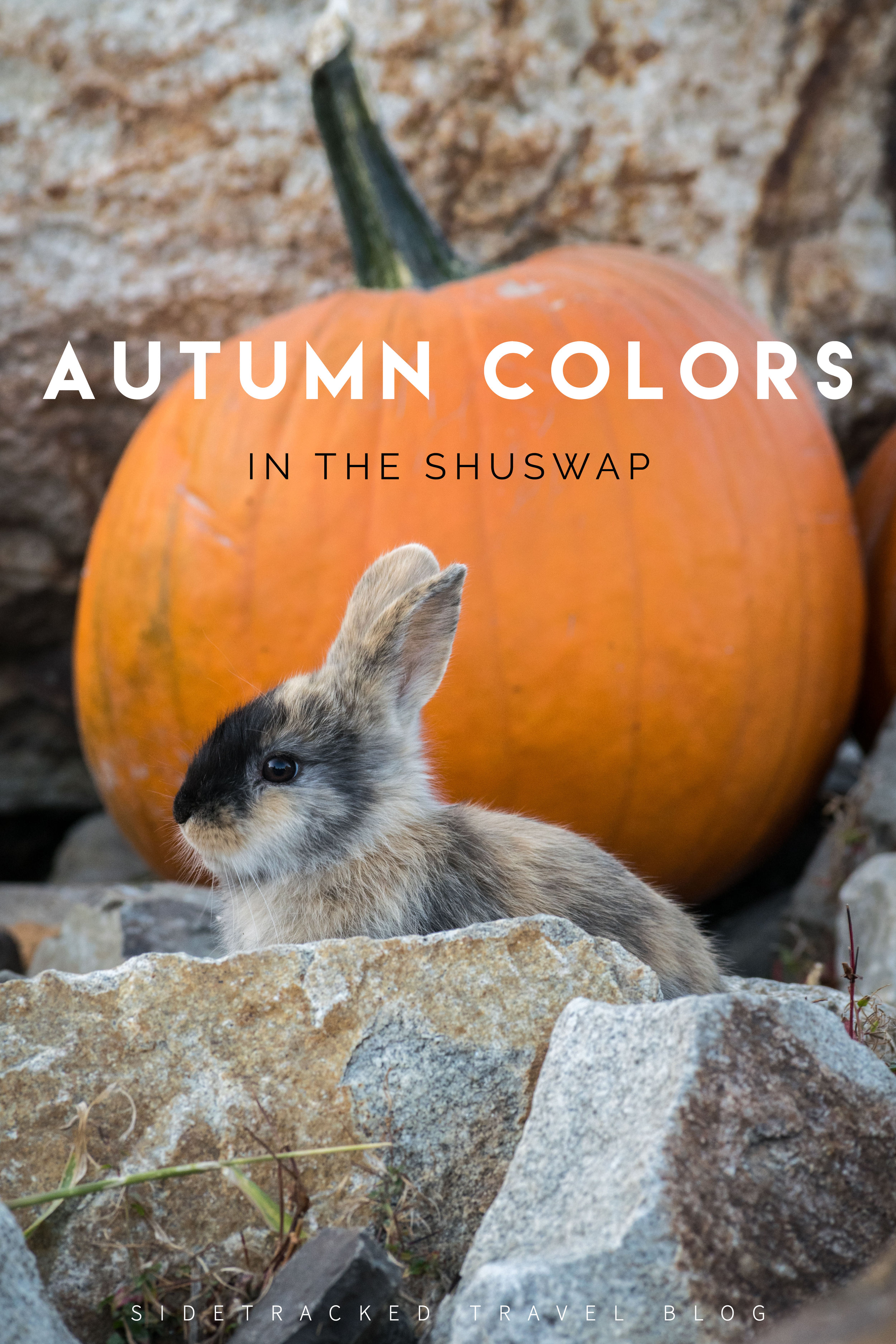 To give you an idea of just how lovely the Shuswap region in British Columbia is, here are some of my favorite photos from a recent fall day trip.