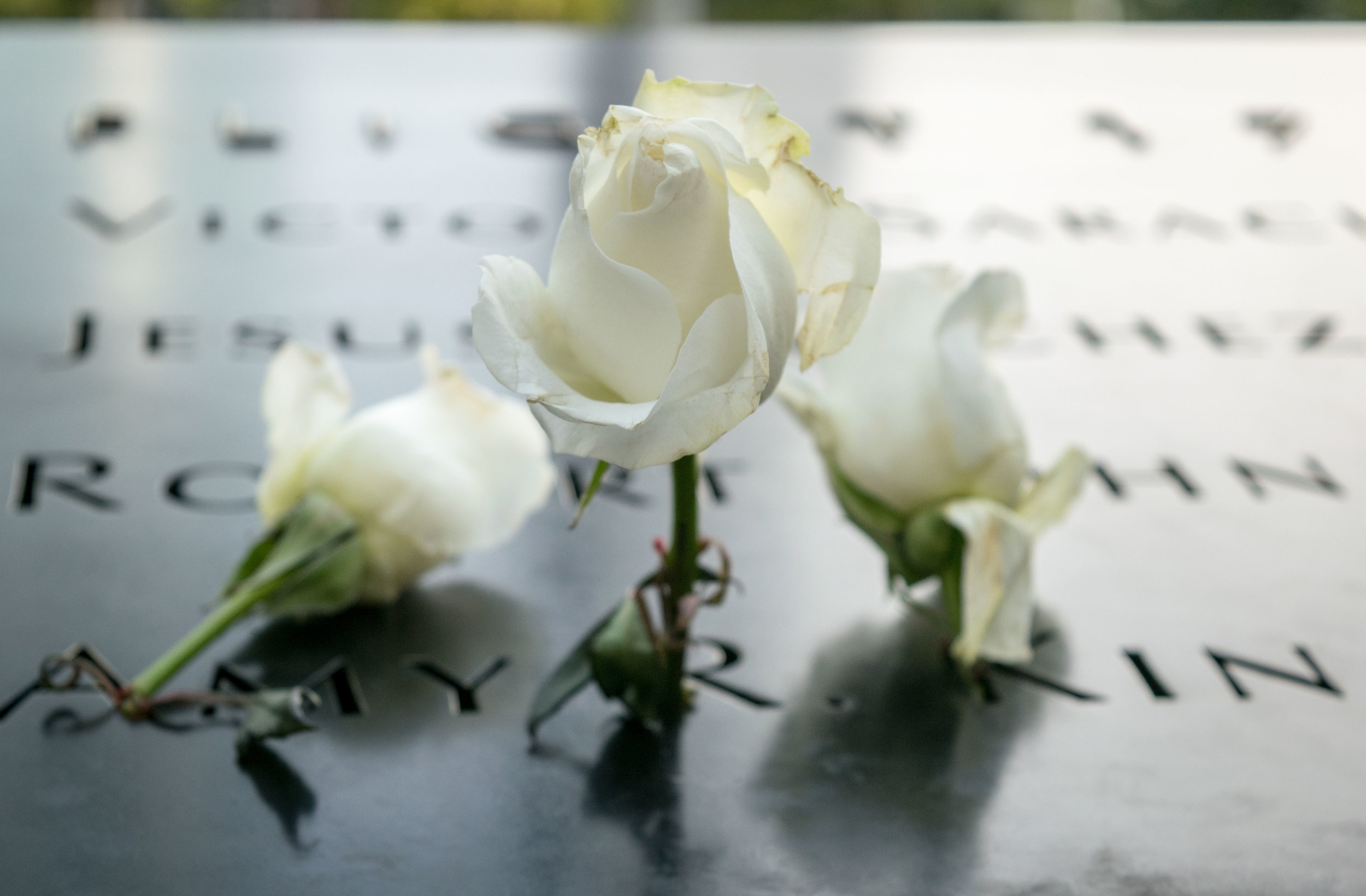 White roses at the 9/11 Memorial, New York City