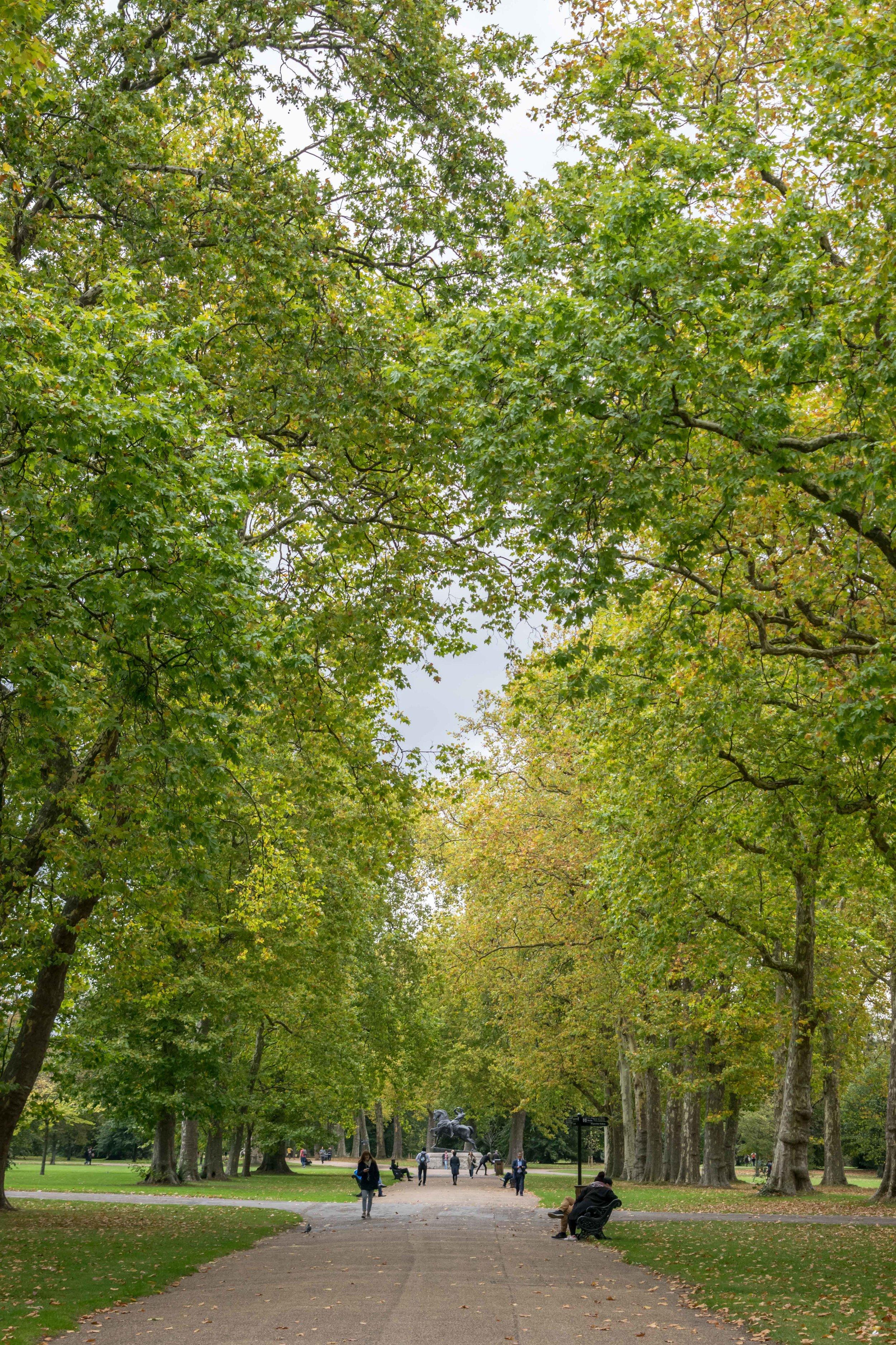 Wide avenue in Hyde Park