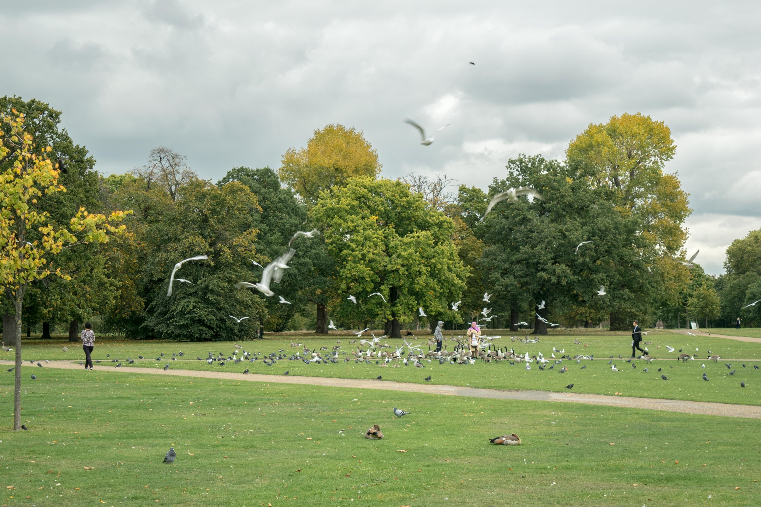People feeding birds in Hyde Park