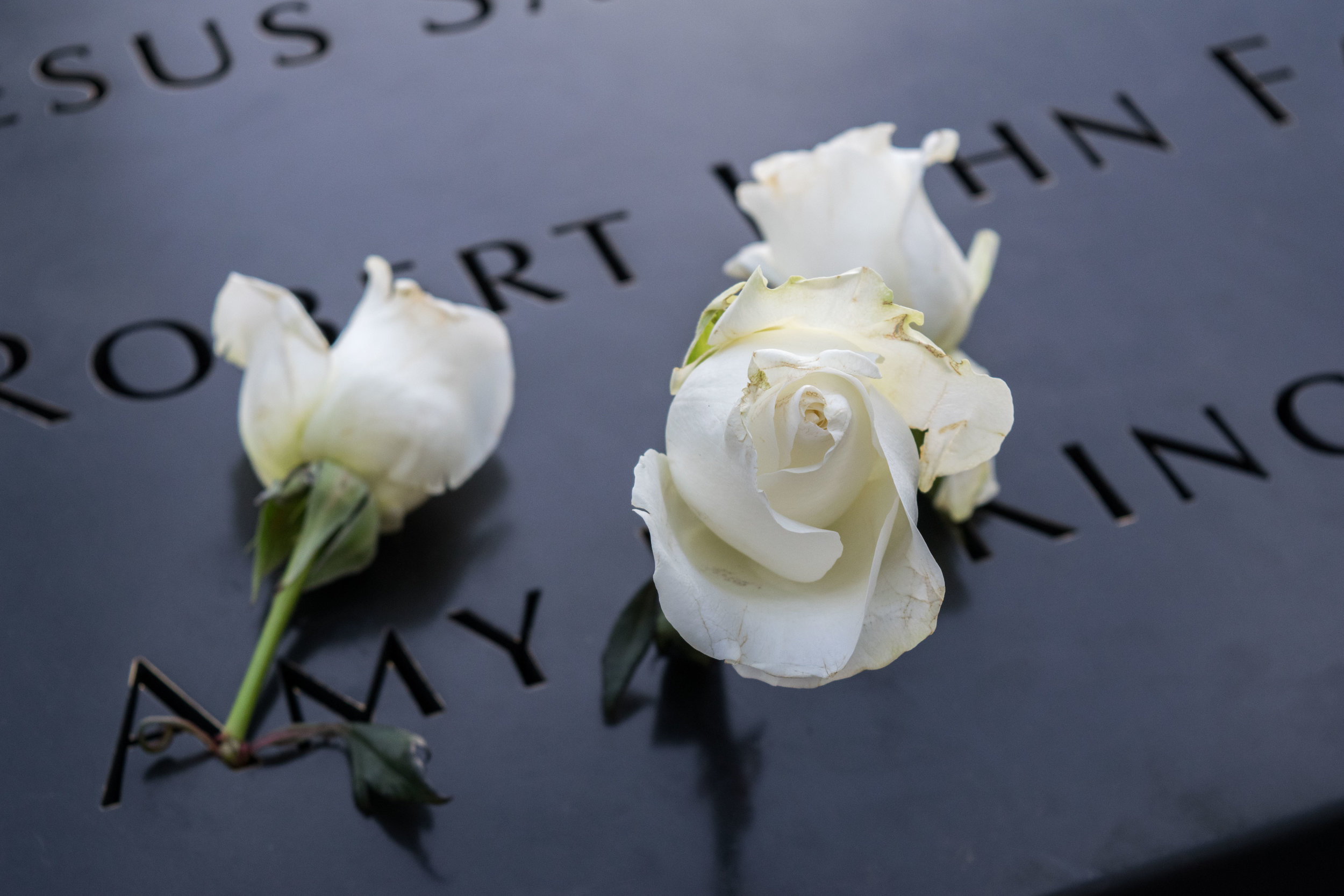 White roses at the 9/11 Memorial