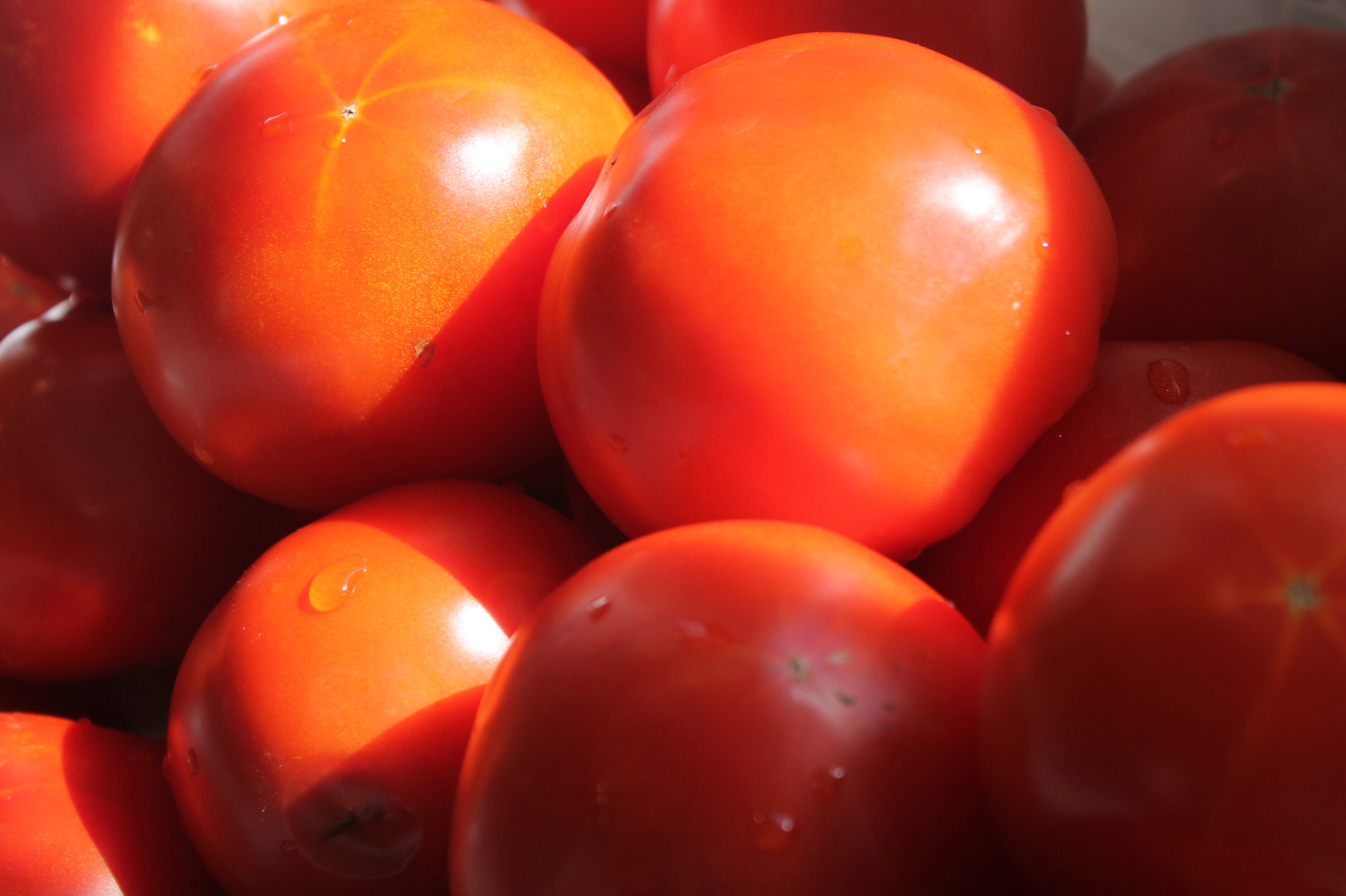 More and More Tomatoes.