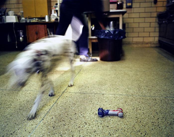 220-01-dog and bone.jpg