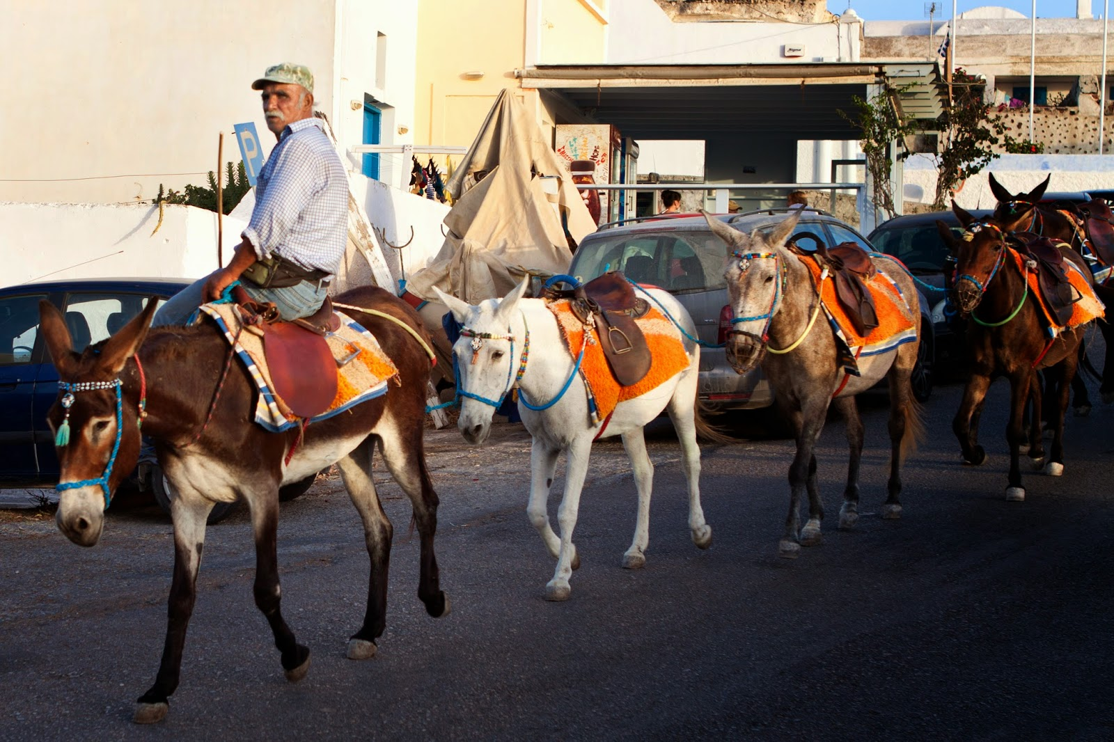 (local man and his horses in Oia)