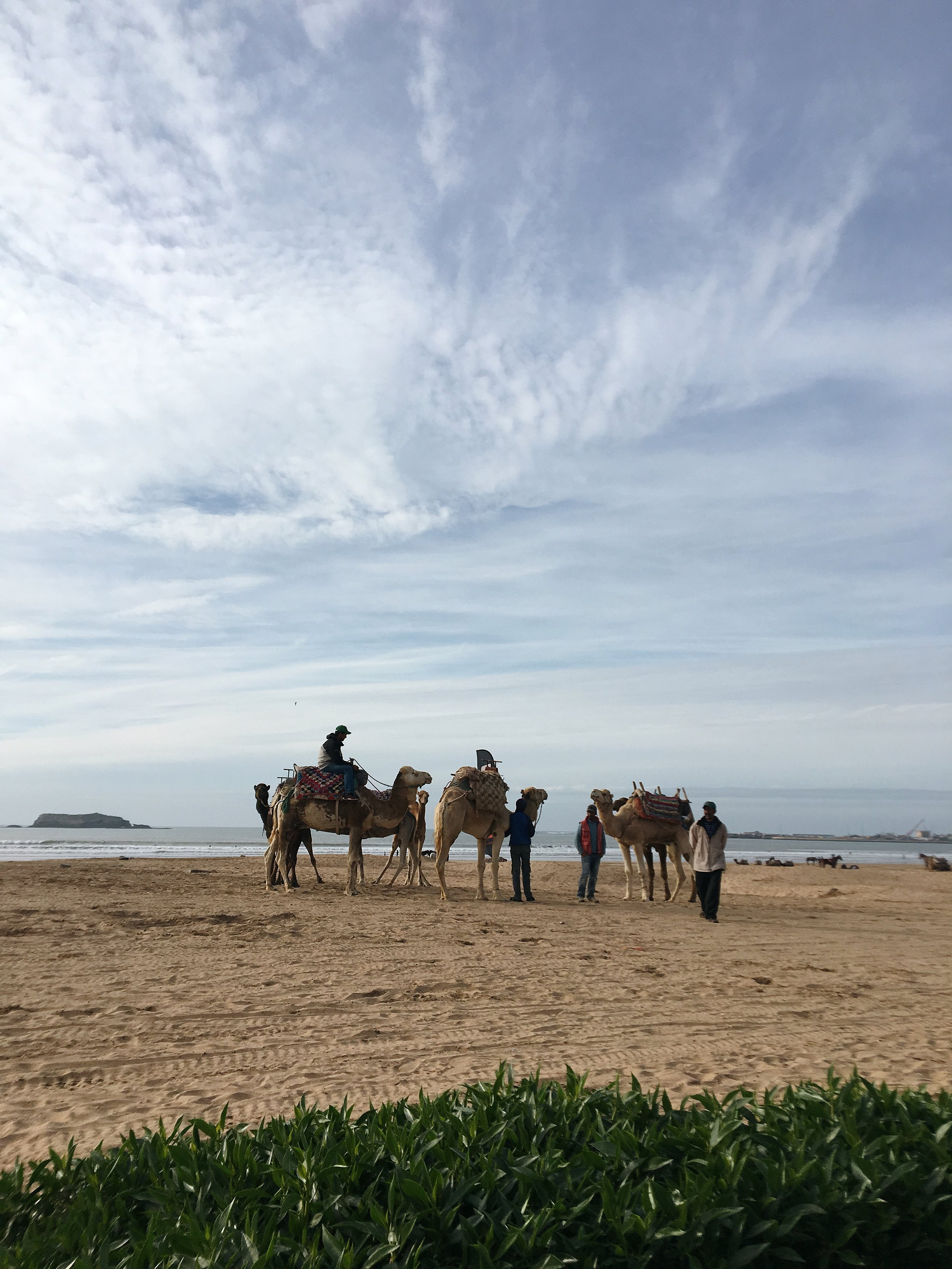 beach essaouira morocco camels