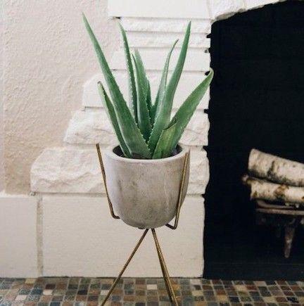 Aloe Vera plant via medium.com