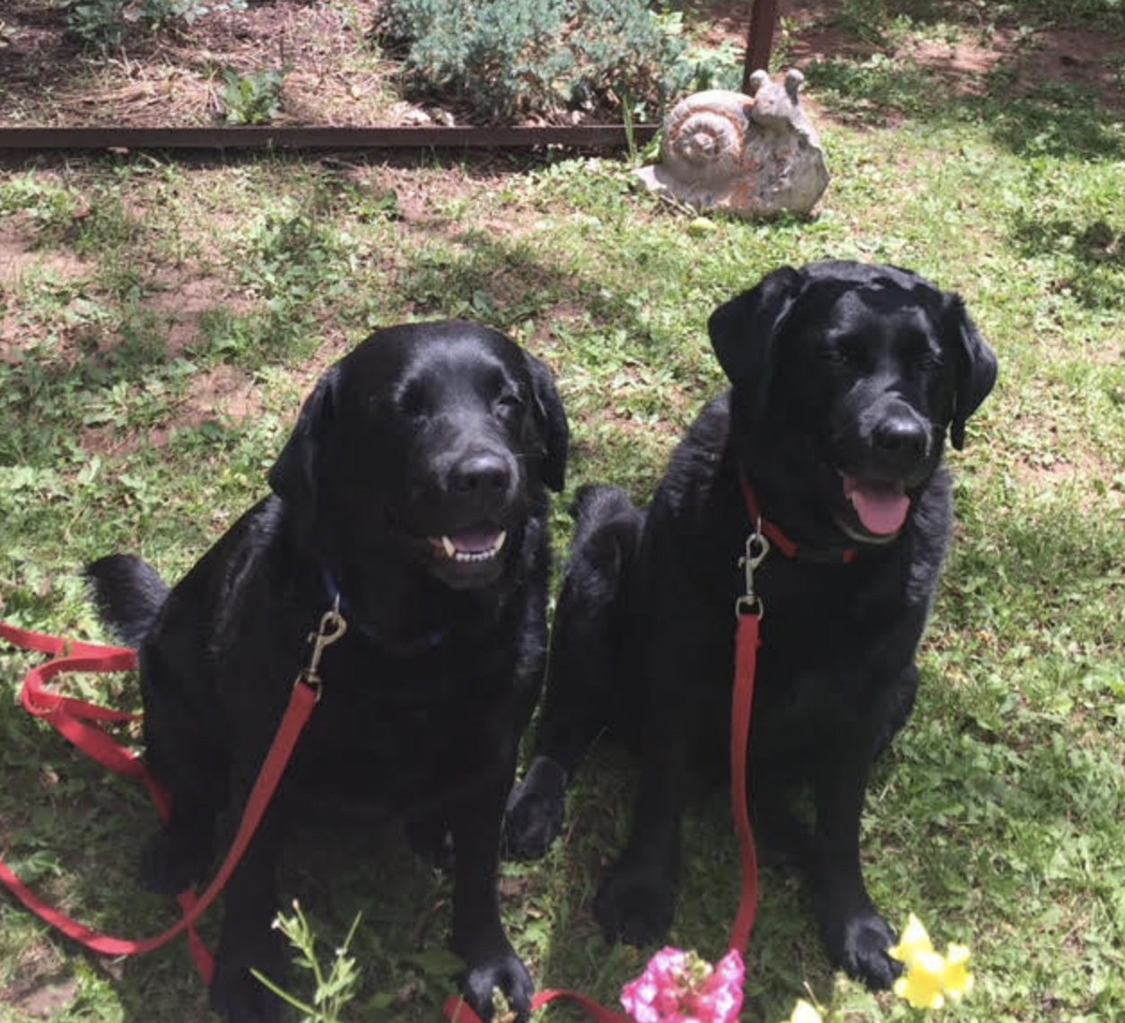 FAITH and HOPE, therapy dogs