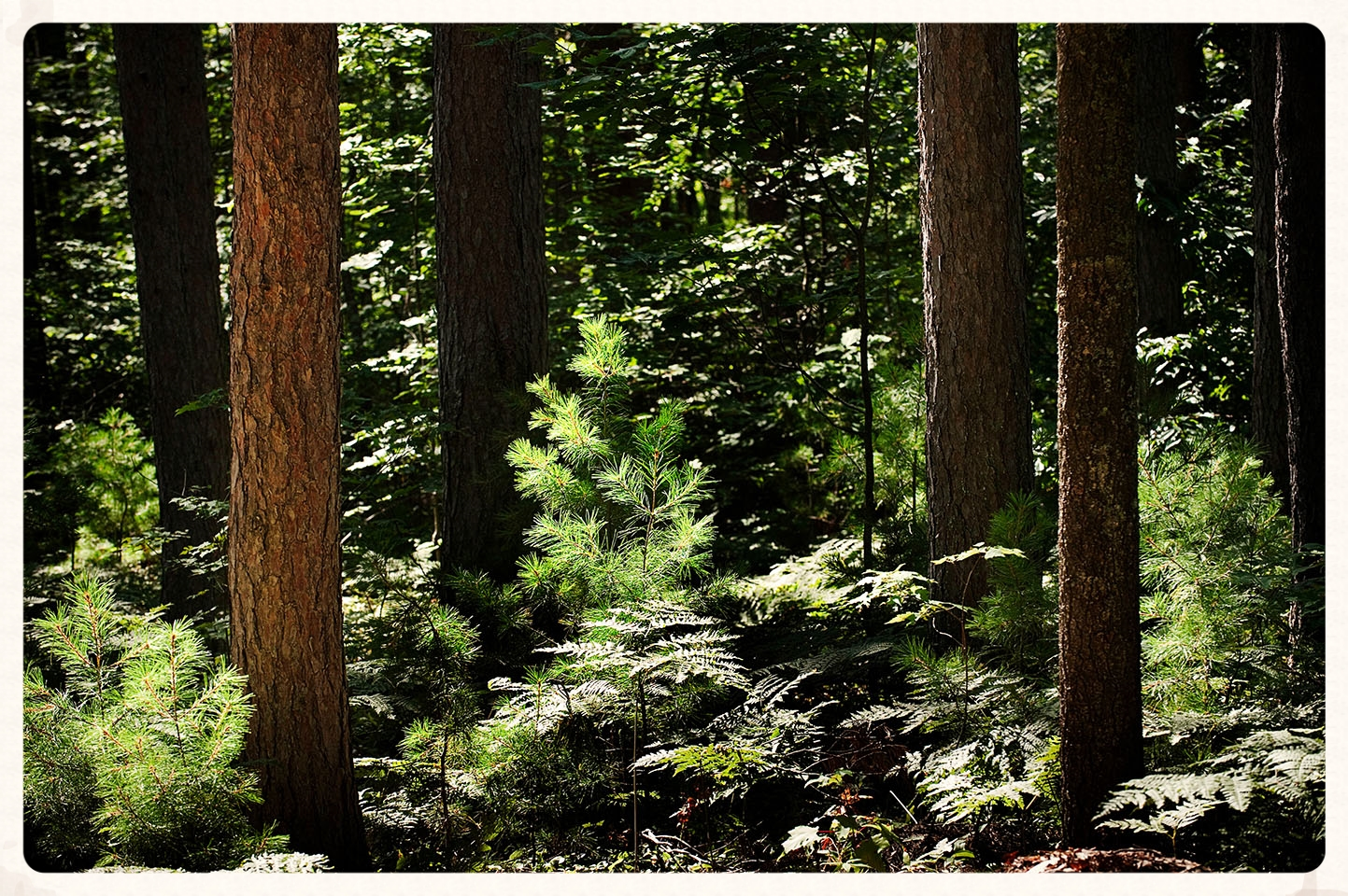 A healthy and diverse forest protects the landscape and creates a rich wild life habitat.