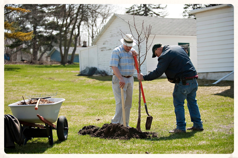 Jonas Zahn planting a tree on Center Street in the City of Beaver Dam.