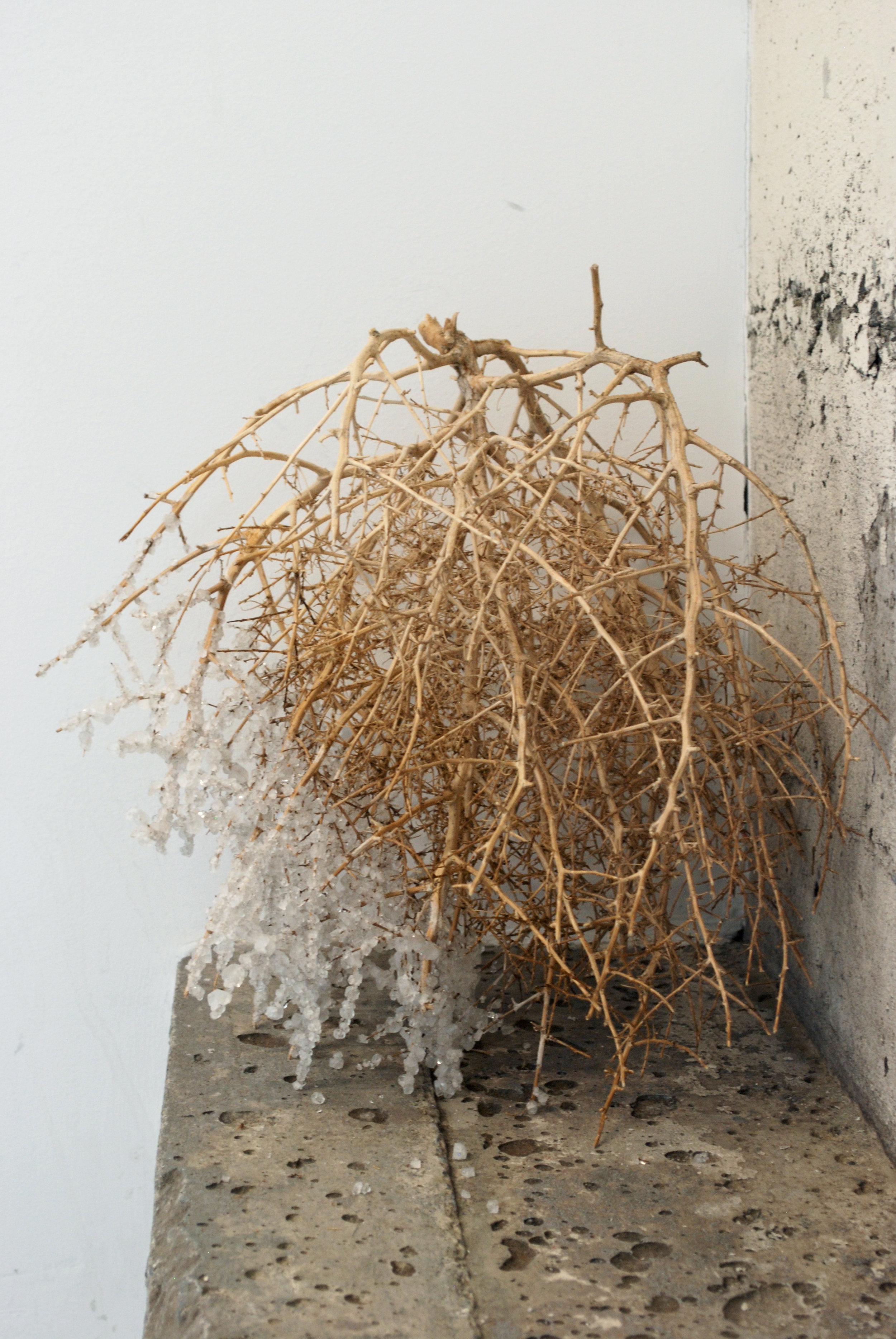 "Detail, ""Supertramp,"" crystalized tumbleweeds 2017"