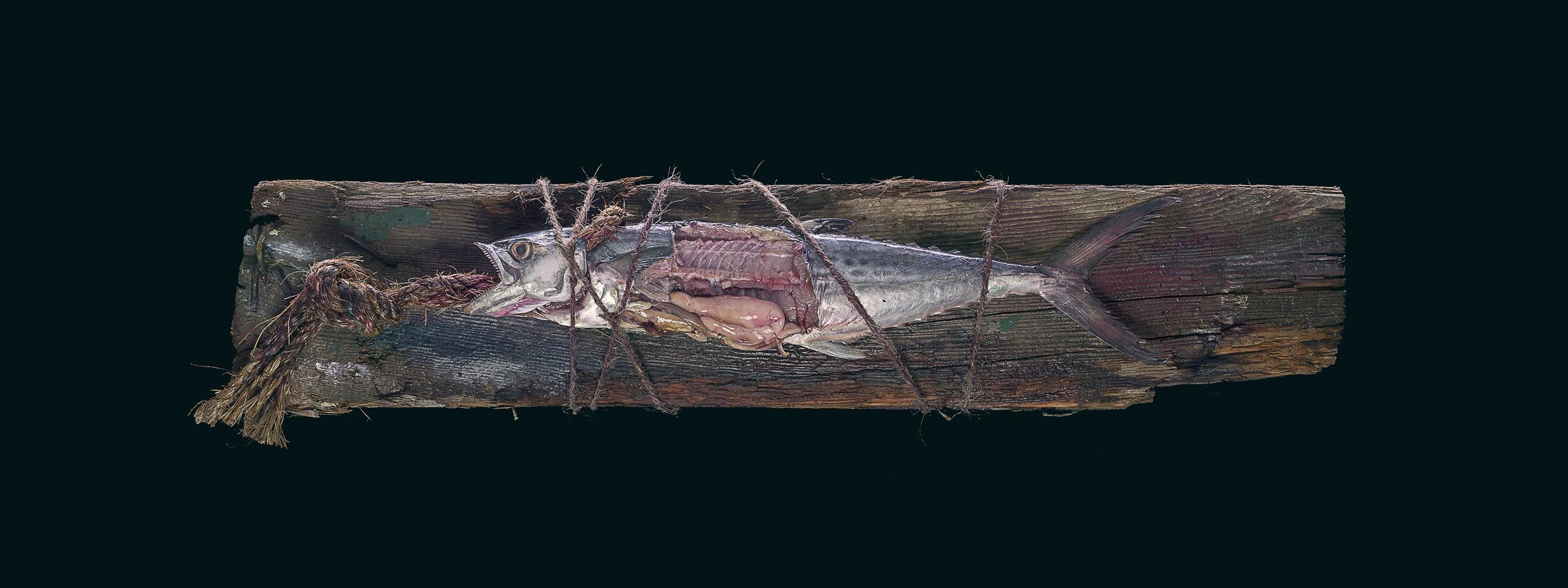 fish-417E.jpg
