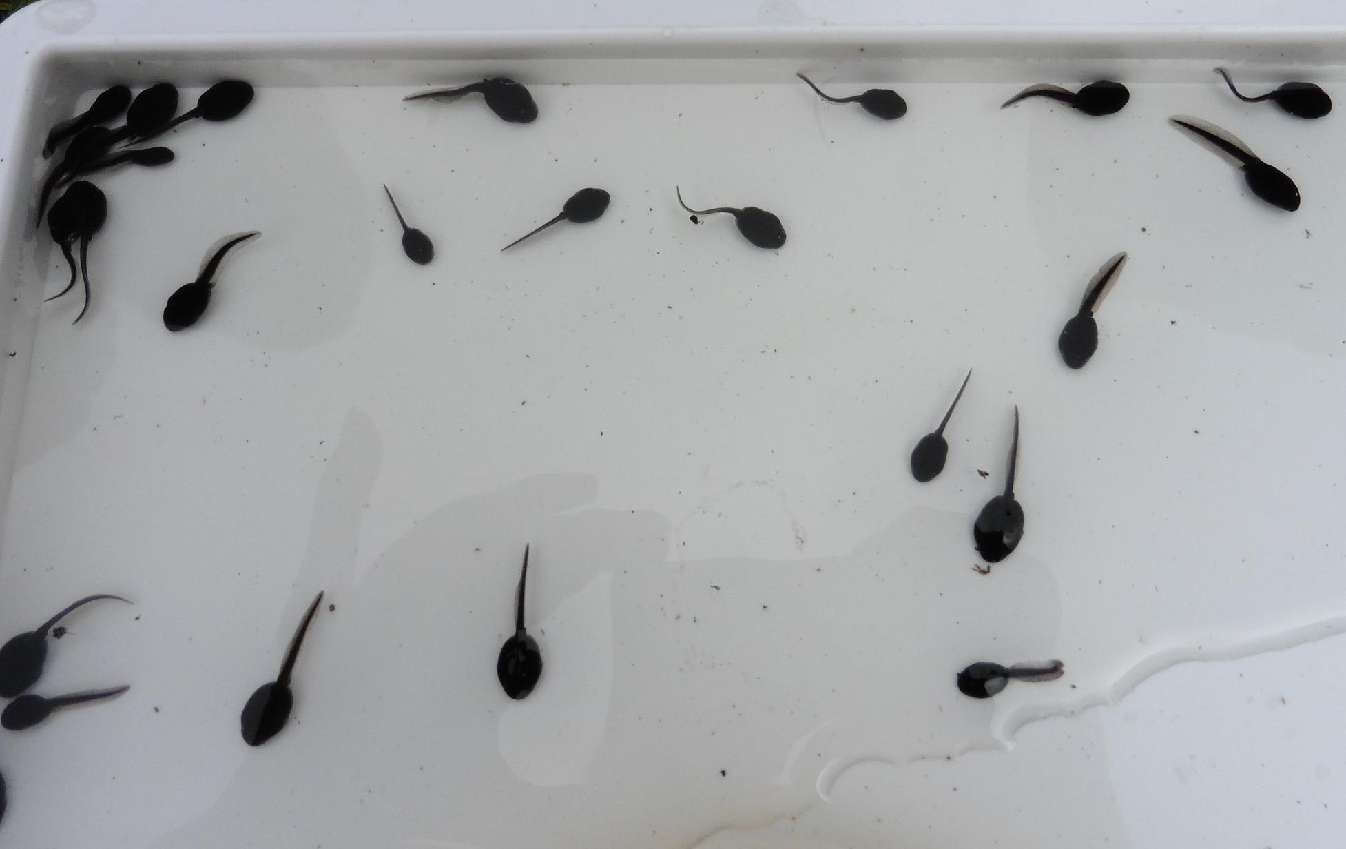 Pond dipping (seasonal)