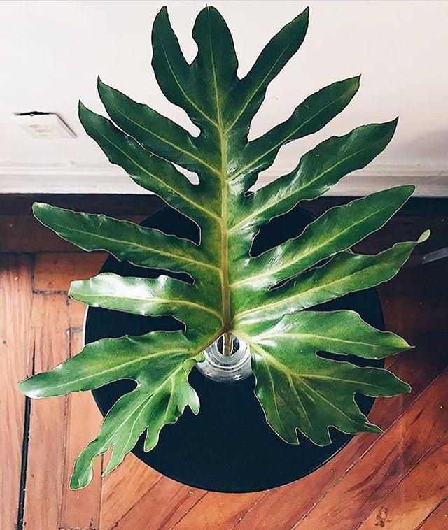 Puro amor pelas nossas plantas 🌿🌿 #repost @ursulacoelho