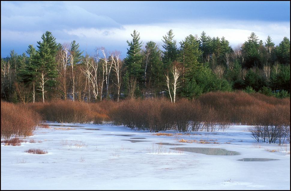Winter Scene Adirondacks.jpg