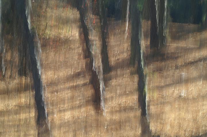 Abstract trees.jpg