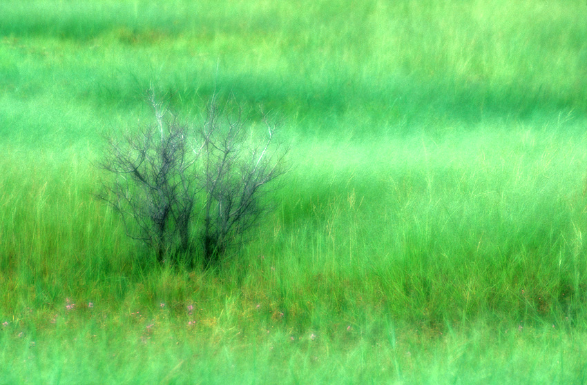 Diffused brush and grass.jpg