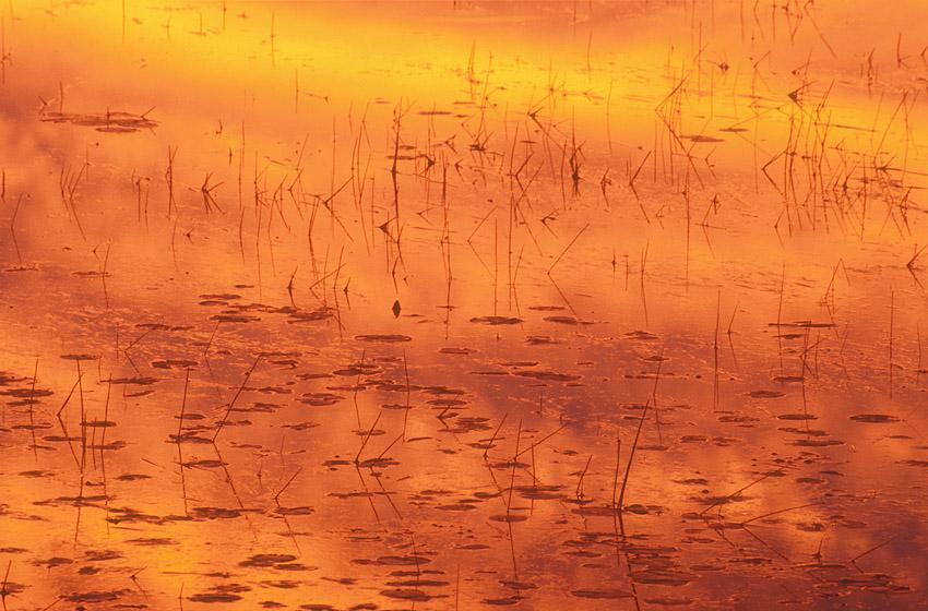 Orange Color on Bog.jpg