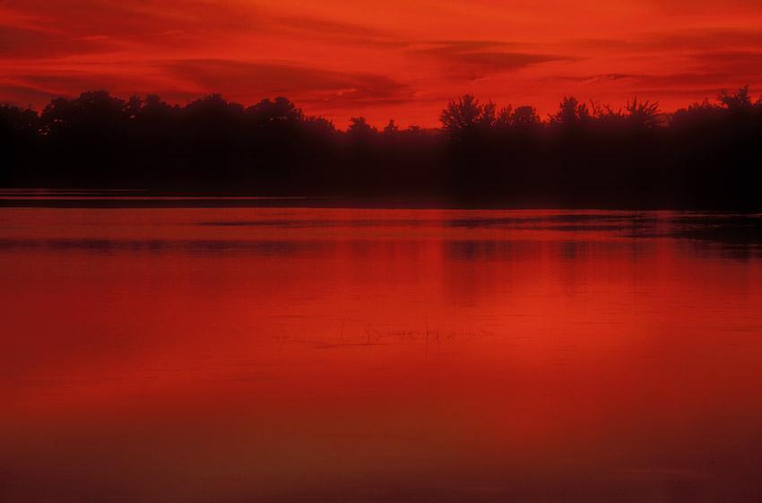Red on the Bog.jpg