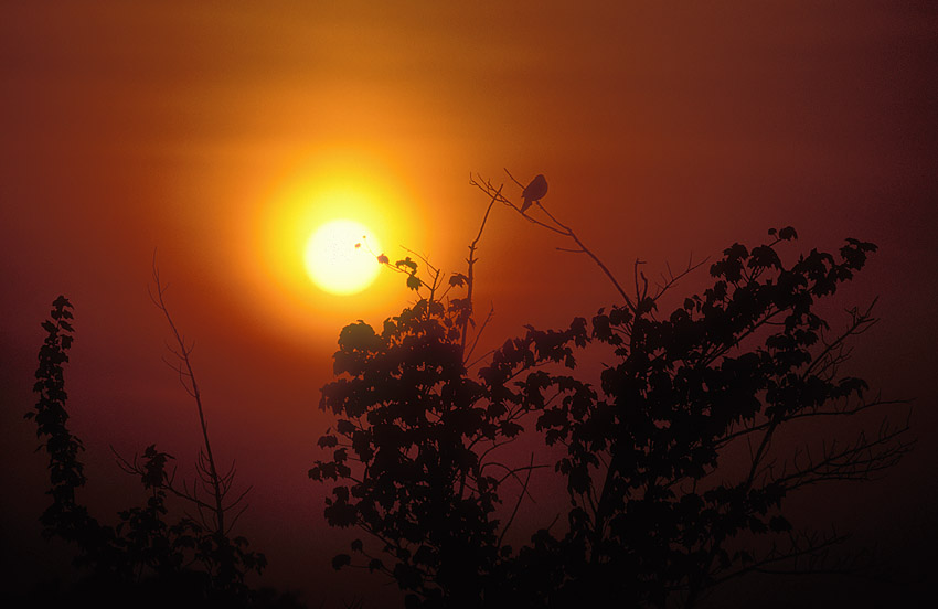 Sunset Bird.jpg