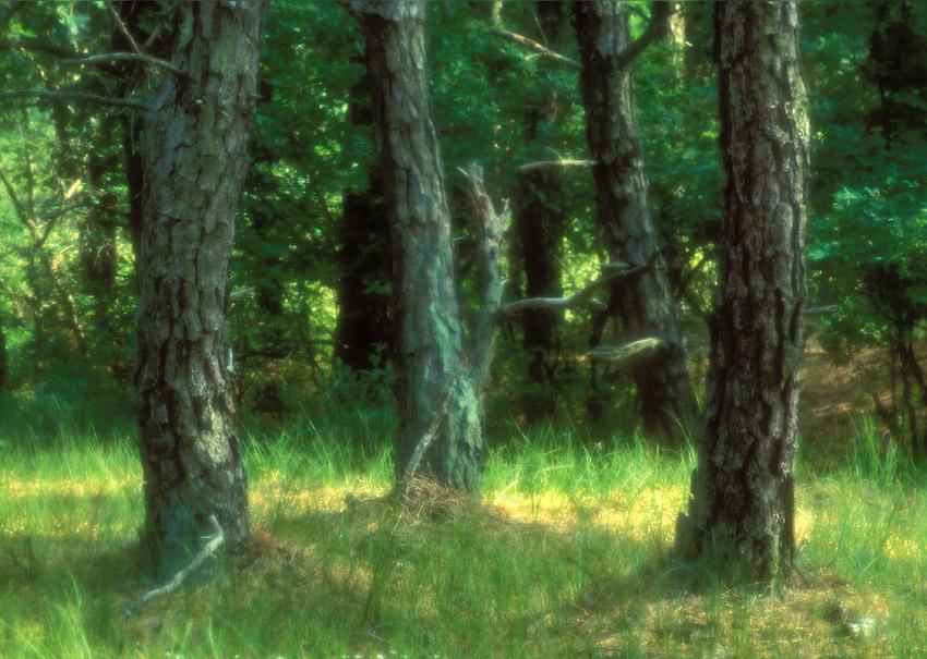 Tree Trunk Dif sharp.jpg
