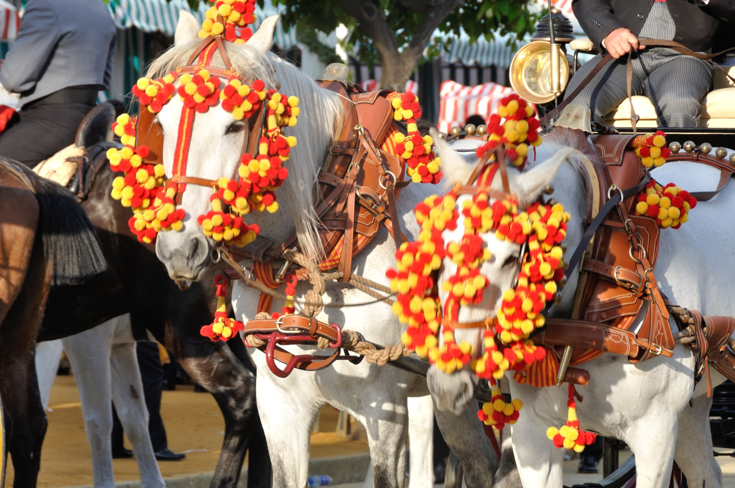 decked out horses