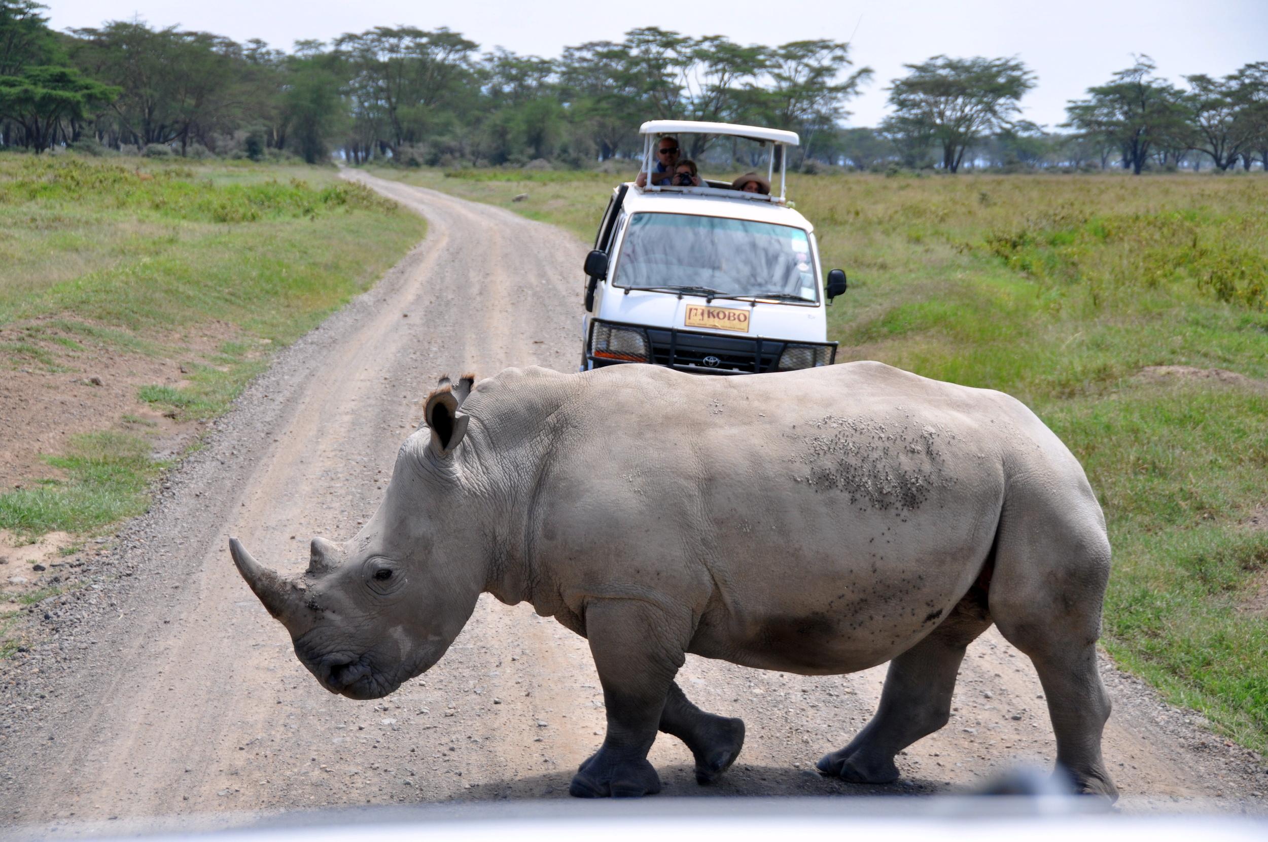 Big Five White Rhino Maasai Mara